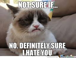 No Grumpy Cat Meme - grumpy cat hates you no matter what grumpy cat cat and grumpy cat