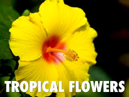 Tropical Rainforest Plant List - 100 rainforest plants and flowers tropical rainforest