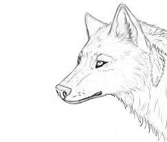 wolf u0027s head sketch ololo by wida smashing on deviantart