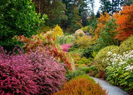 Glow Botanical Gardens 6 Lessons For A Stunning Fall Garden Sunset Magazine