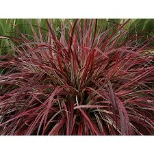 Fake Plants Home Depot Shop Ornamental Grasses At Lowes Com