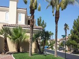 turf grass tucson arizona city landscape front yard landscaping