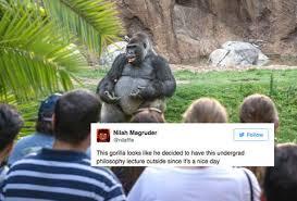 Gorilla Memes - ted talk gorilla is the internet s favorite new meme thrillist