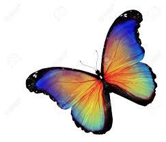 imagenes de archivo libres de derechos mariposa azul amarillo sobre fondo blanco fotos retratos imágenes