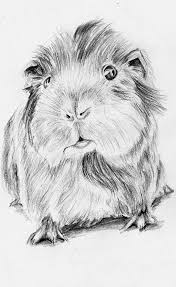 40 best sketching ideas images on pinterest draw animal