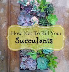 22 idées déco insolites avec des plantes succulentes gardens