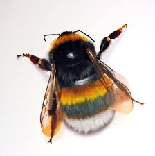 one bumblebee three children and me u2013 a lesson learned u2013 kindness