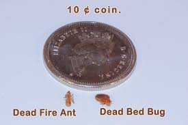 Tiny Crawling Bugs In House by Help My Laptop Is Bed Bug Infested Pest Free Living