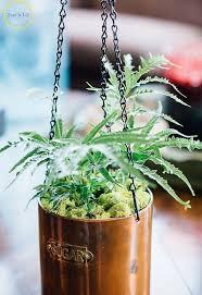 diy hanging planter hometalk