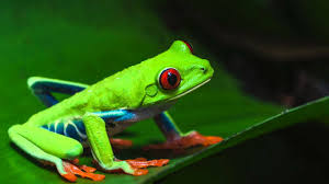 frog sounds 11 hours sounds of nature 53 of 59 pure nature