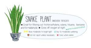 benefits of houseplants caring for indoor plants perfect plants