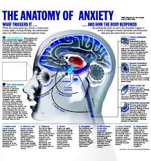 anatomy of anxiety image collections human anatomy learning