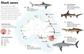 timeline of deadly shark attacks in australia australian geographic