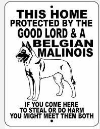 belgian malinois us secret service 10 best malinois u0026 gsd images on pinterest german shepherds