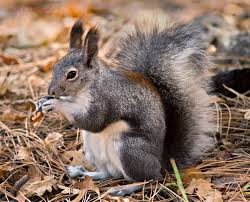 the holy trinity of the southwestern mountains tree squirrel