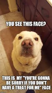 Cute Dog Memes - cute dog imgflip