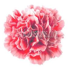 bulk carnations 14 best bulk carnations images on wedding bouquets