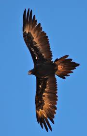 the 25 best largest bird of prey ideas on pinterest birds of
