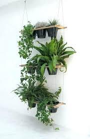 low light indoor plants indoor hanging plant low light indoor hanging plants indoor plants