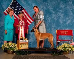 belgian shepherd national specialty national specialty 2013 u2013 gettysburg pa u2013 abmc