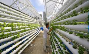 the future of vertical farming sustainable gardens sustainable