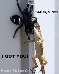 Huge Spider Memes Image Memes - gis ed good guy spider memes and came across this not sure if