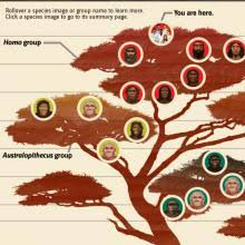 human evolution evidence the smithsonian institution u0027s human
