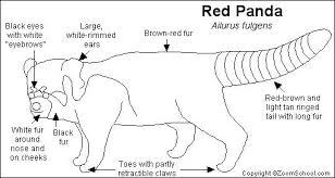 red panda printout enchantedlearning