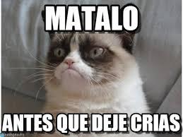 imagenes chistosas sin groserias imagenes y memes chistosos de gatos imagenes chistosas
