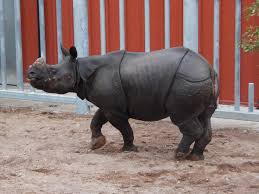 new indian rhino area to open
