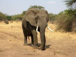 The Blind Men And The Elephant Analysis The Elephant Not In The Room U2014 Strong Towns