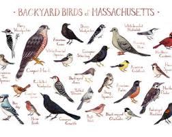 Nj Backyard Birds by New Jersey Backyard Birds Field Guide Art Print Watercolor