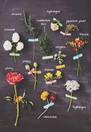 flowers names list chart plants flower chart