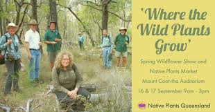 queensland native plants spring wildflower show and native plant market mt coot tha