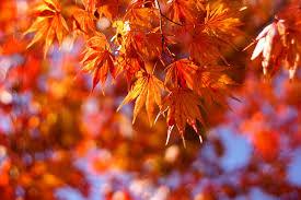 Shade Of Orange Names 13 Species Of Maple Trees