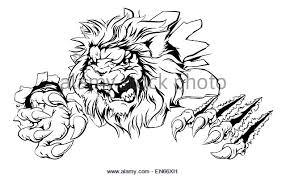 lion attacking tattoo stock photos u0026 lion attacking tattoo stock