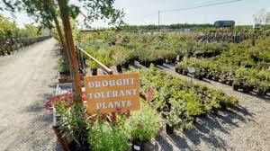 luis u0027 nursery visalia ca plant nurseries youtube
