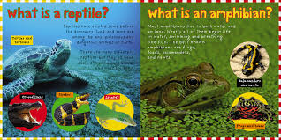 smart kids reptiles and amphibians roger priddy macmillan