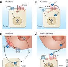 がんの標的治療がんにおけるヘッジホッグ経路の治療可能性を解明する