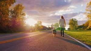 australian shepherd off leash young woman with long hair running with his dog on the road in the