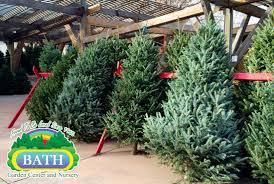 christmas astonishing real christmas trees withal for sale in