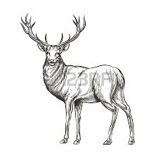 6 490 moose stock vector illustration and royalty free moose clipart