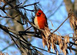 cardinal 2 why evolution is true