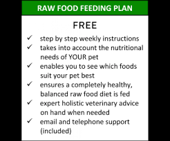 vince the vet superfood raw food feeding plan for dogs and cats