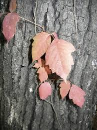 fall u0026 monticello garden janet carson