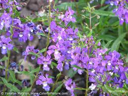 native florida plants low maintenance bc3 things