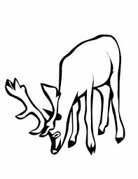 deer coloring animals town animals color sheet deer