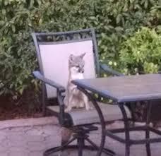foxes find el sobrante backyard playground u2013 the mercury news