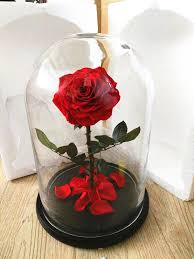 preserved roses preserved roses in glass flower in glass from yunnan buy