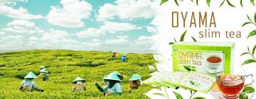 Teh Oyama oyama slim tea pelansing semarang jualo